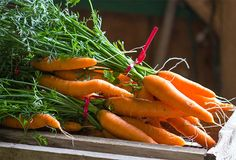 How to Grow the Best Carrots: https://www.westcoastseeds.com/articles-instructions/seed-talk/how-to-grow-carrots-from-seed-some-tricks/