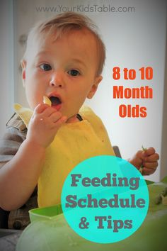 feeding schedule for 8 to 10 months