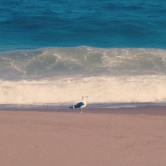 Layers of colors. A seagull on Mansa beach in Punta del Este, Uruguay.