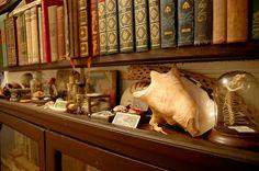 Wunderkammer shelf