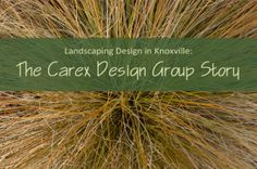 As we enter Carex Design Group's second year as a landscape design and project management company in Knoxville, Tenn., I thought it was appropriate to look back — not only at our first year of landscaping in Knoxville but also at the past projects, places and experiences that led us to where we are now. www.carexdesigngroup.com