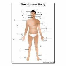 Our Bodies Themed Resources - Primary Treasure Chest Our Body, Human Body, Doc Mcstuffins, A4, Party Ideas, Image, Doc Mcs, Ideas Party