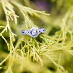 """@cassidymister #cassidyMRphotography  """"Not only have I been getting the best couples but they all seem to have the most amazing rings too!  #cassidyMRengagements"""""""