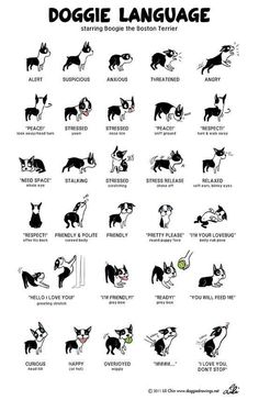 Know your dog's language. | 25 Brilliant Lifehacks That Every Dog Owner Should Know