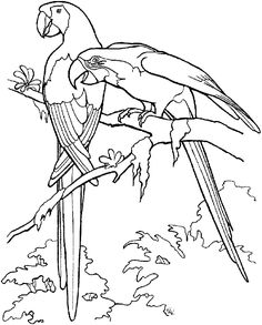 Parrot Coloring Pages Birds Printable