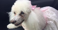 A glamorous dress? Check. Frilly cake? Check. Doggy bounce house? Check, check, check!