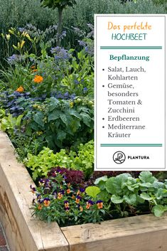 10 Tipps für das perfekte Hochbeet - Plantura The perfect raised bed: planting. We show you ten tips for a perfect raised bed and the right plants! More about this at Plantura. Garden Types, Love Garden, Garden Soil, Garden Beds, Vegetable Garden, Clean Out, Plants For Raised Beds, Square Foot Gardening, Plant Needs