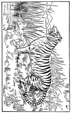 Cat Coloring Pages - 6.....................also lots of other coloring and images for art