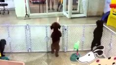 Excited puppy spots its owner - YouTube