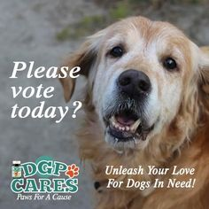 Please vote for Elder Paws Senior Dog Rescue, starting today. You can vote once per day through August 6th. Go to www.dgpforpets.com/dgpcares. The charities receiving the most votes will each receive a $500 donation. We need your help, Pinterest pinners. Thank you so much!