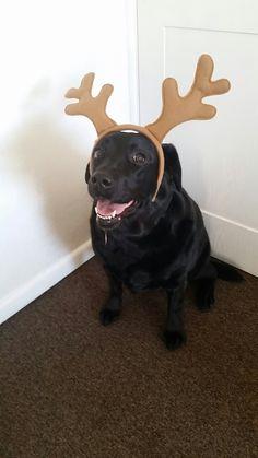 Lara pretending to be a reindeer.