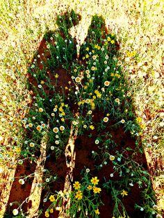 Fresh new beginnings at Kathleen Springs, near Kings Canyon in central Australia Australian Garden Design, Australian Native Garden, Australian Plants, Native Gardens, Photo Essay, Plant Design, Native Plants, New Beginnings, Garden Plants