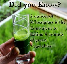 THE power of extraordinary wheat grass...if you dont want to grow yourself..keva juice has shots. Healthy Habits, Healthy Tips, Healthy Choices, Healthy Recipes, Happy Healthy, Healthy Food, Healthy Junk, Raw Food, Healthy Weight