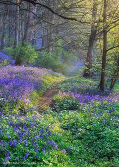 I want to walk along a path deep in the blue bell woodlands. Will you come with me?