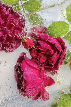 Somerville artist Mary Kocol has created and photographed ice plates embedded with frozen flowers.