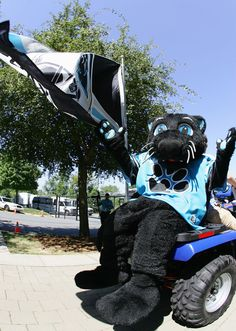 Sir Purr, the Panthers mascot
