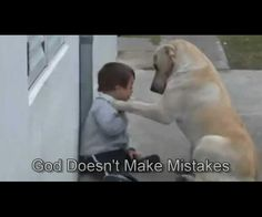 Sweet Mama Dog Interacting with a Beautiful Child with Down Syndrome. From Jim Stenson. - Just Labrador Animals And Pets, Funny Animals, Cute Animals, Talking Animals, Funny Dogs, Beautiful Children, Animals Beautiful, I Love Dogs, Puppy Love