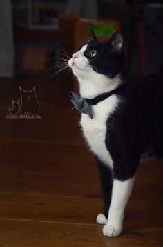 smo #cat