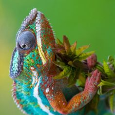 Very Colorful Lizard!