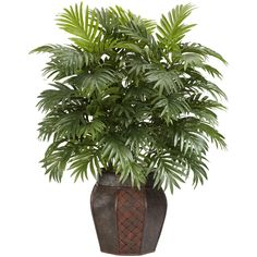 Areca Palm Floor Plant with Decorative Vase Reviews (375 BRL) ❤ liked on Polyvore featuring home, home decor, floral decor, areca palm tree, areca palm and butterfly palm