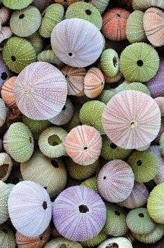 Sea Urchins | Hazardous Marine Life - DAN Health & Diving