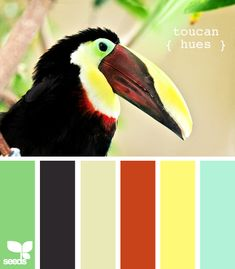 bold colours & black, this toucan has been going through my wardrobe ! from design-seeds.com