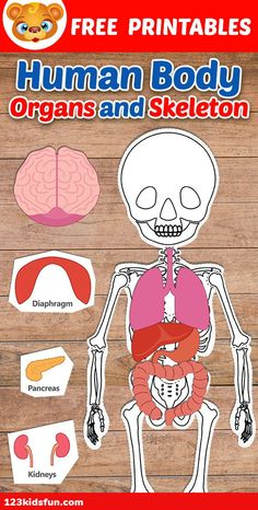 Human Body Systems for Kids Free Printables - Homeschooling Human Body Lesson, Human Body Science, Human Body Activities, Human Body Unit, Human Body Systems, Body Parts For Kids, Body Parts Preschool, Human Skeleton For Kids, Human Body Crafts For Kids