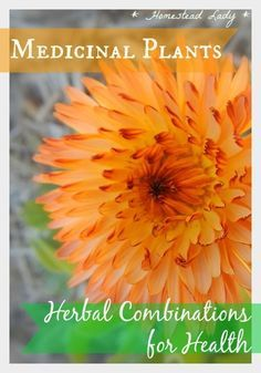 Medicinal Plants Herbal Combinations for Health l Homestead Lady
