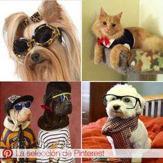 Desde perros con zapatos hasta un gato con corbata.