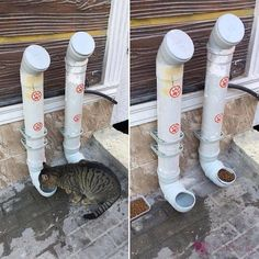 It's time for you to diy cat toys in order to have some cat fun. We hope that this diy cat will get you creative. Diy cat items are good for working now. Diy cat furniture will make your cat happy. Diy ideas for whevere you have free time! Feral Cat Shelter, Feral Cats, Cat Shelters, Shelter Dogs, Outdoor Cat Enclosure, Outdoor Cats, Outdoor Cat Shelter, Outside Cat Shelter, Cat House Outdoor
