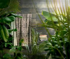 Cactus Plants, Landscape, Design, Moldings, Full Bath, Bathing, Nice Asses, Scenery, Cacti