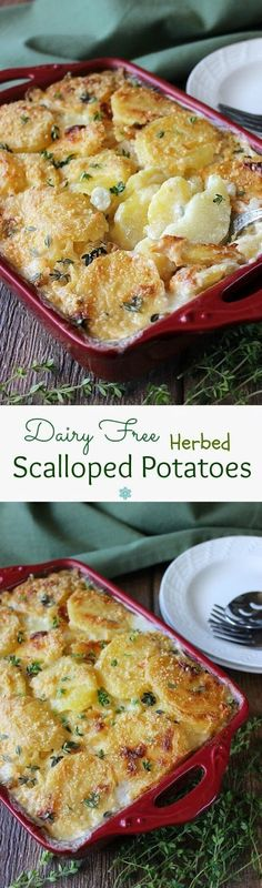 Dairy Free Herbed Scalloped Potatoes is comfort food at it's best. Potatoes baked in a casserole that have been covered with a creamy white sauce. Herbs sprinkled over all for a little extra sumpin (Vegan Potato Recipes) Vegan Side Dishes, Food Dishes, Dairy Free Recipes, Vegetarian Recipes, Gluten Free, Lactose Free, Dairy Free Christmas Recipes, Easy Recipes, Dairy Free Appetizers