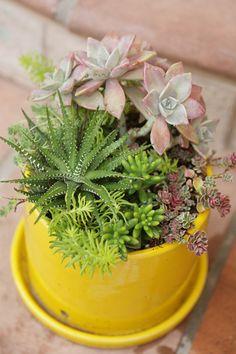 Potted succulent arrangments                                                                                                                                                                                 More