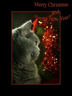 Oh my, the wonder of Christmas!       qb  - Lara