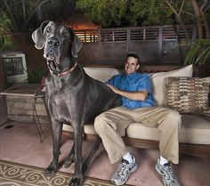 very-large-dogs-around-the-world-2-pclayer.jpg (600×532)