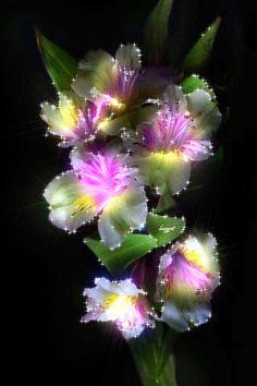 GIFS HERMOSOS: floresencontradas en la web