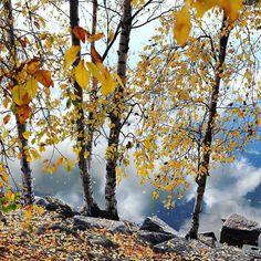 #mystoryhelsinki #canonnordic #autumnleaves #töölö #töölönlahti #myhelsinki #helsinki #reflections #ig_helsinki #helsinkiofficial #visithelsinki #ourhelsinki #visitfinland #ig_finland #explorefinland #discoverfinland #ourfinland #thisisfinland #finland_photolovers #thebestoffinland #igersfinland #igscandinavia #nordicphotos  #planetwanderlust #yleluonto #uusiluontokuva #suomenluonto Helsinki, Autumn Tale, Wanderlust, Finland, Travel, Instagram, Viajes, Trips, Traveling