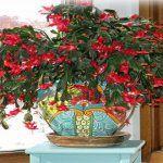 Ezt az egyet sohase csináld a karácsonyi kaktuszoddal! Plants, Plant, Planets