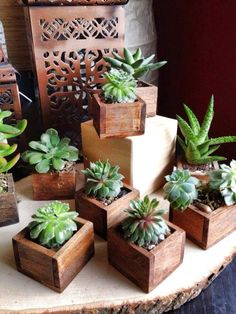 56 Incredibly Amazing DIY Succulents Project Ideas The benefit of succulents is they can be indoors OR outdoor plants. They go beyond hens and chicks there are many types of succulents.