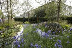 Irises were everywhere at Chelsea this year, including in the Telegraph garden and in Hugo Bugg's environmentally?conscious ?rain garden? for the Royal Bank of Cananda (pictured), where there was a drift of Siberian iris (Iris sibirica 'Perry?s Blue?).