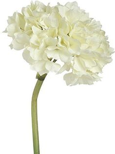 Our beautiful Cream Colored Hydrangea Flowers are wonderful to use as stand alone flowers or as an addition to a bouquet. These stems are perfect to place in a simple glass vase- no arranging needed. | eBay!