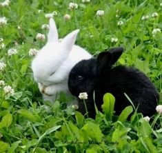 Jubilant rabbit