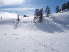 Beautiful Snow for Skiing  http://www.expressbusinessdirectory.com/Companies/SkiA-Designs-Ltd-C6071