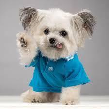 Image result for norbert dog