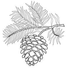 view the pictures of pine tree branches with a pinecone print and color this pinecone with pine branches outline drawing
