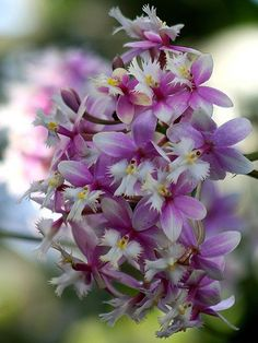 Orchids by donsutherland1