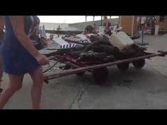 Пляж на Мамайке расчистили. Группа быстрого реагирования сработала на 10...