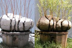 Картинки по запросу living sculpture