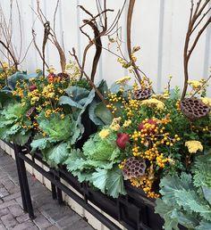 Fall Annuals | Window Box | Container | Planter | Urban | Garden | Landscape | Design