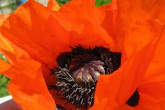 HeArtfully Creating: Poppies....So Inspiring
